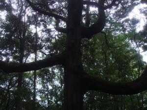ゾウサンの木
