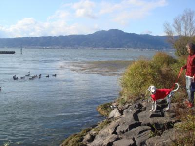 琵琶湖の鳥3
