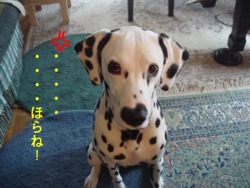 DSC06204_convert_20100623042746.jpg