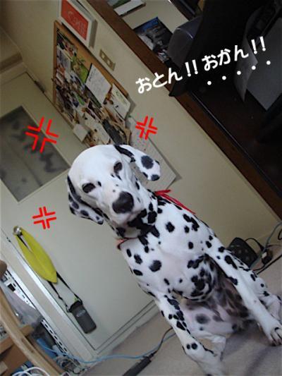 DSC06764_convert_20100814154803.jpg