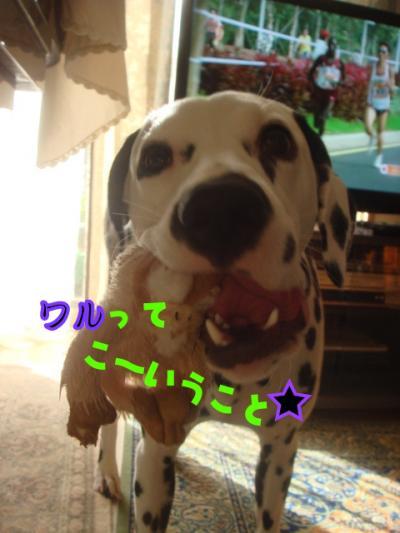 DSC07609_convert_20101127200654.jpg