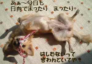 blog2006.10.19-1.jpg