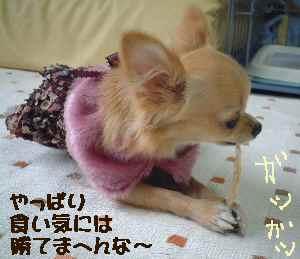 blog2006.10.20-2.jpg