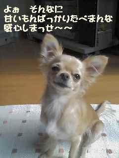 blog2006.11.16.jpg