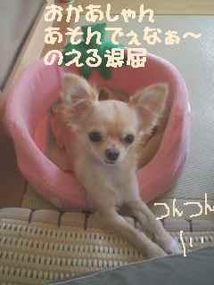 blog2006.11.2.jpg