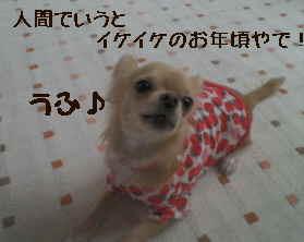 blog2006.12.12.jpg
