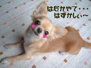 blog2006.12.14.jpg