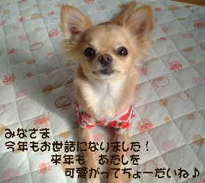 blog2006.12.31.jpg