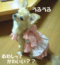blog2006.9.27-2.jpg