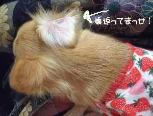 blog2007.1.12-2.jpg