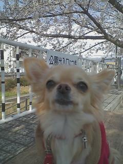 のえると桜