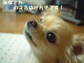 blog2007.6.1.jpg