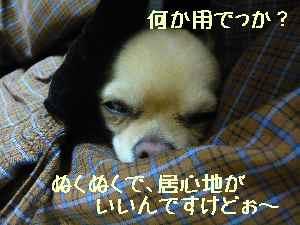 blog2008010701.jpg