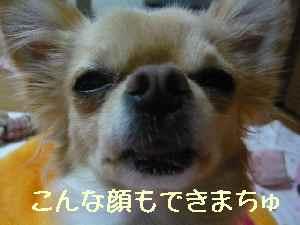 blog2008010801.jpg