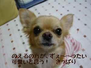 blog2008011603.jpg