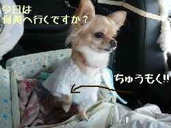 blog2008011901.jpg
