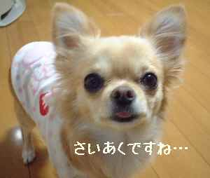blog20080122.jpg