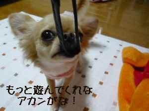 blog2008012402.jpg