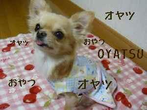 blog2008012803.jpg