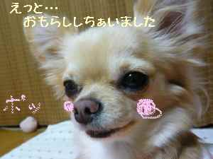 blog20080129.jpg
