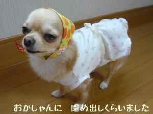 blog2008013002.jpg
