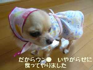 blog2008013003.jpg