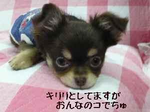 blog2008013103.jpg