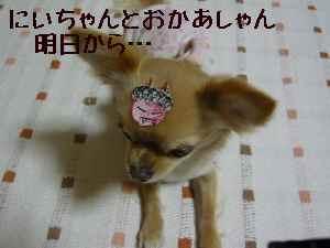 blog2008020301.jpg