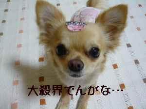 blog2008020302.jpg