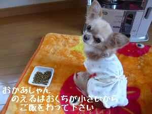 blog2008021405.jpg