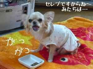 blog2008021406.jpg