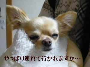 blog2008021603.jpg