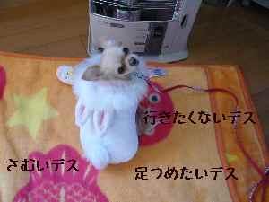 blog2008021802.jpg