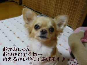 blog2008021901.jpg