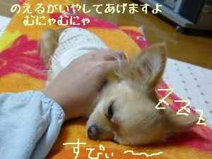 blog2008021902.jpg