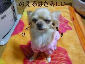 blog20080223.jpg