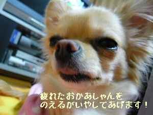 blog2008022501.jpg