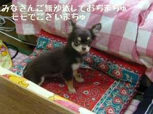 blog2008030501.jpg