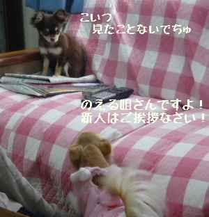 blog2008030502.jpg