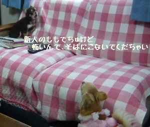 blog2008030504.jpg