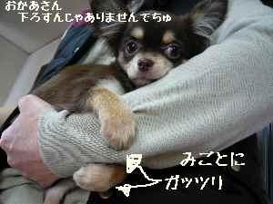 blog2008030506.jpg