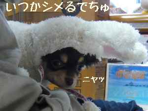 blog2008030508.jpg