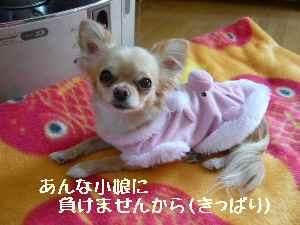 blog2008030509.jpg