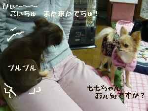 blog2008031001.jpg