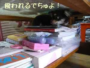 blog2008031002.jpg
