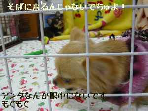 blog2008031003.jpg