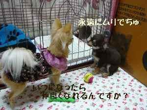 blog2008031004.jpg