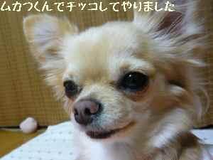 blog2008031007.jpg