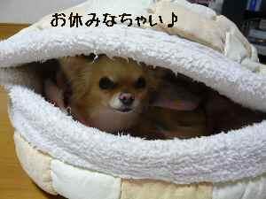 blog20080315.jpg