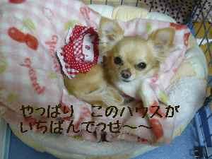 blog20080322.jpg